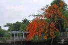 bangkokdsc_5938